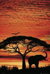 Africa Sunset poster: Elephant (24x36)