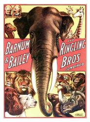 Barnum & Bailey and Ringling Bros circus poster (18 X 24) Elephant