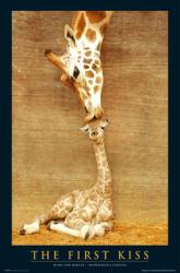 The First Kiss poster: Giraffe Mother & Baby (24x36)