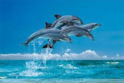 Four Dolphins poster: Photography by Steve Bloom (36x24)