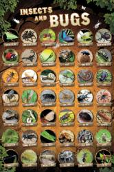 Insects and Bugs poster (24x36) Educational poster