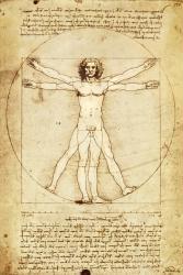 Leonardo Da Vinci poster: Vitruvian Man (24x36)