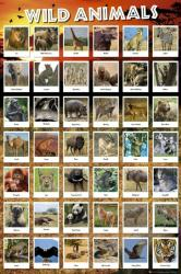 Wild Animals poster (24x36) Educational poster