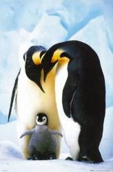 Penguins poster: Penguin Parents (24x36)
