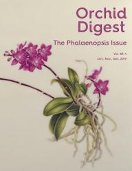 The Phalaenopsis Issue